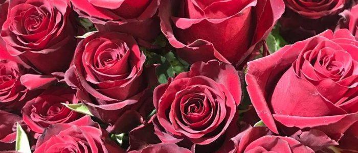 Rose Festa donne